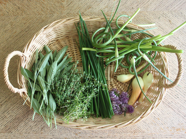 A basket full of scapes and herbs