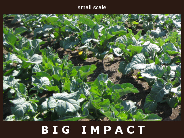 Your Small Garden Can Change the World