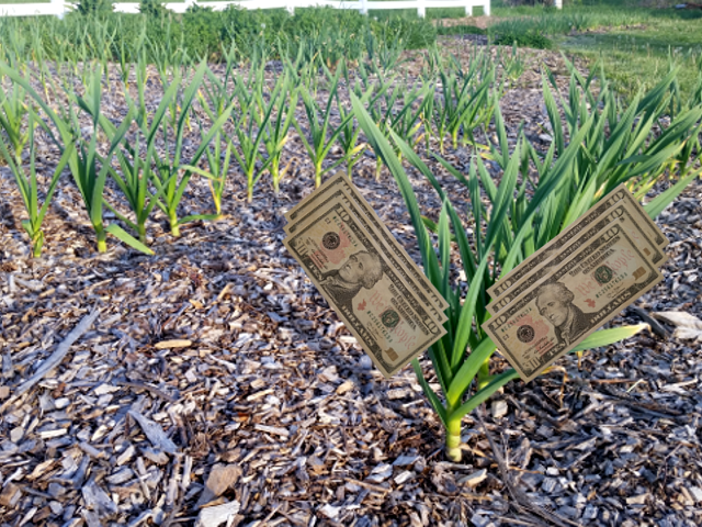 Turn Your Backyard Garden Into Dollars
